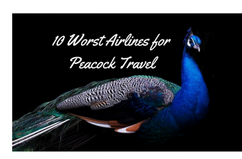 Bad Airlines for Peacock Travel