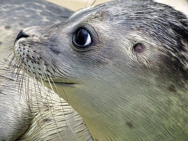 Seal Sanctuary Cornwall